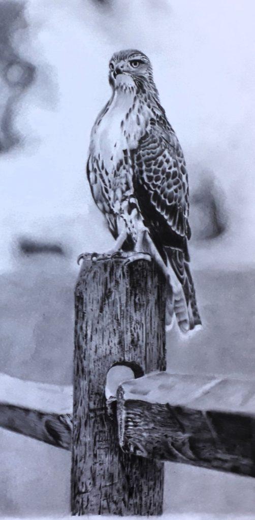 falcao desenho 502x1024 - Desenho realista de animais - guia definitivo parte 1