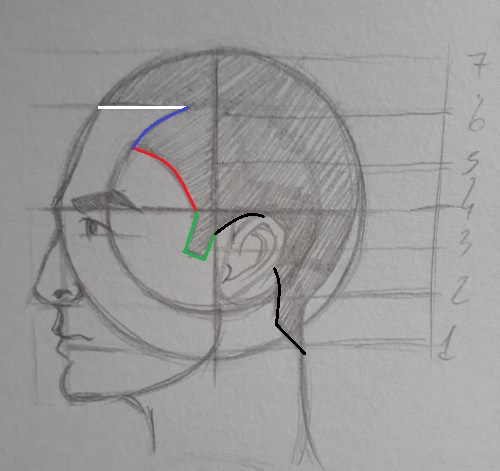 como desenhar cabelo metodo Loomis - Como desenhar rosto - tutorial método Loomis parte 2