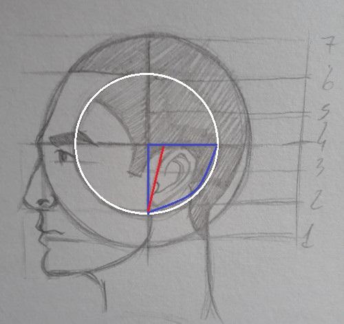 como desenhar orelha - Como desenhar rosto - tutorial método Loomis parte 2