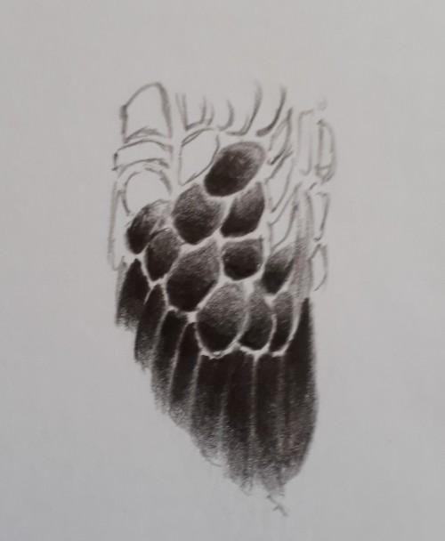desenho de penas de ave - Desenho realista de animais - guia definitivo parte 1