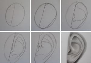 como desenhar orelha imagem destacada 300x210 - O Caminho da Arte