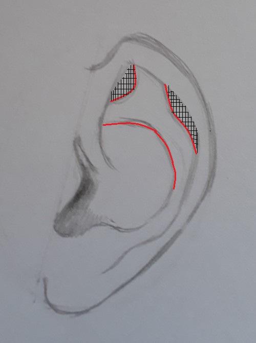 como desenhar orelha passo 7 marcado - Como desenhar orelha em 7 passos fáceis e rápidos