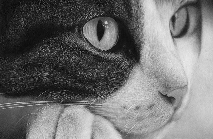 curso de desenho reginaldo artes - Curso de desenho realista Reginaldo Artes - análise completa