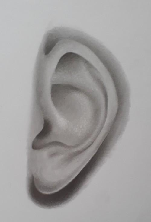 orelha terminada - Como desenhar orelha em 7 passos fáceis e rápidos