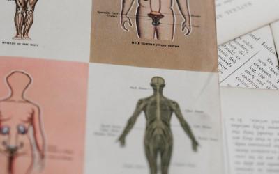 dica de desenho anatomia - Dicas de desenho - 19 dicas para desenho rápidas